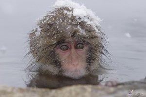 Shiga Kogen Snow Monkey Park